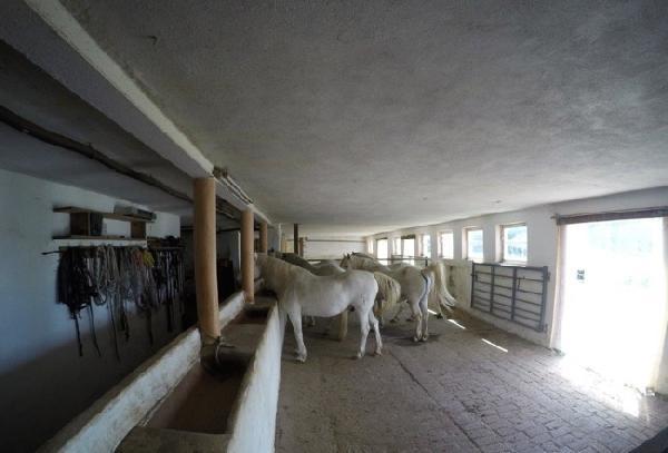 Landgoed/Paardenhouderij met vakantiewoningen foto 2